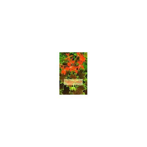 Marion Nickig - Pelargonien - Preis vom 14.10.2021 04:57:22 h