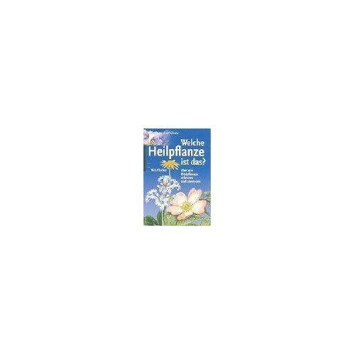 Fischer, Wolfgang K. - Welche Heilpflanze ist das?: Über 400 Heilpflanzen erkennen und anwenden - Preis vom 03.08.2021 04:50:31 h