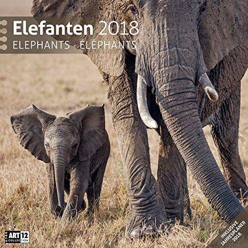 Ackermann Kunstverlag - Elefanten 30x30 2018 - Preis vom 23.01.2020 06:02:57 h