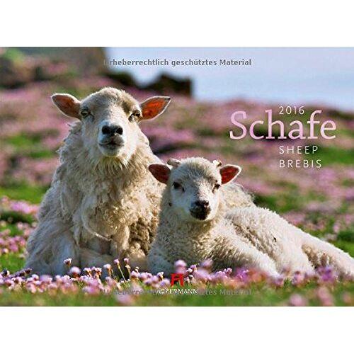 Ackermann Kunstverlag - Schafe 2016 - Preis vom 12.11.2019 06:00:11 h