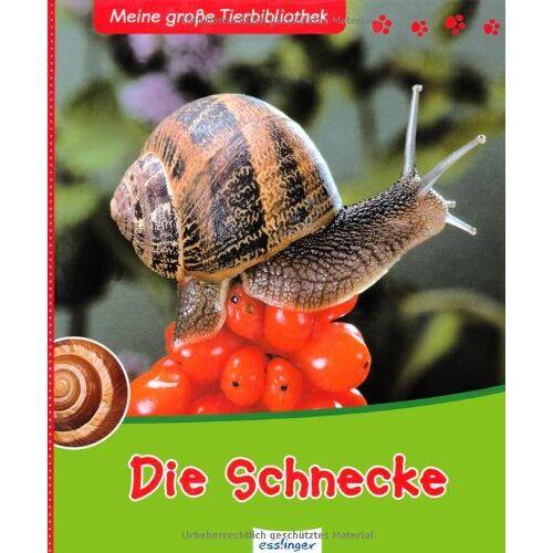 Paul Starosta - Die Schnecke - Preis vom 05.03.2021 05:56:49 h