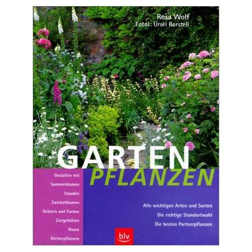 Rosa Wolf - Gartenpflanzen - Preis vom 05.09.2020 04:49:05 h