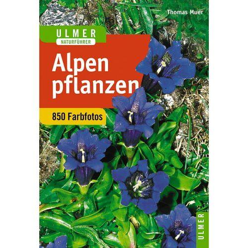 Thomas Muer - Alpenpflanzen - Preis vom 16.04.2021 04:54:32 h