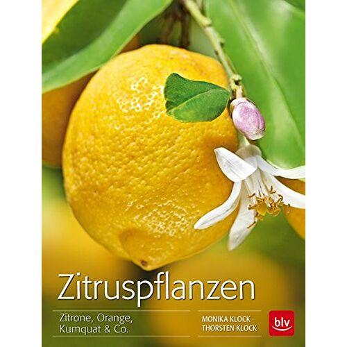 Monika Klock - Zitruspflanzen: Zitrone, Orange, Kumquat & Co. - Preis vom 20.10.2020 04:55:35 h