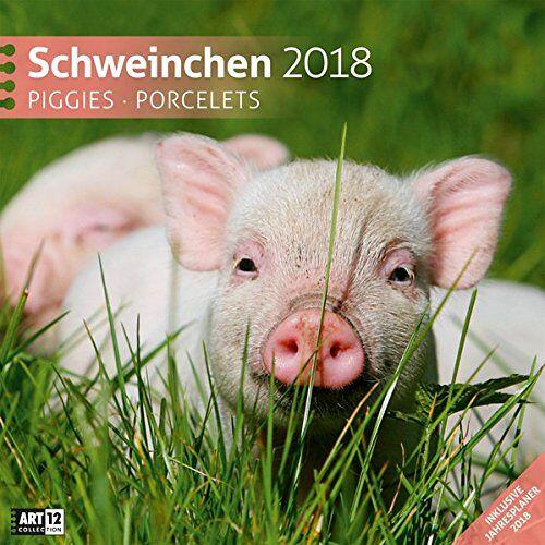 Ackermann Kunstverlag - Schweinchen 30x30 2018 - Preis vom 23.01.2020 06:02:57 h