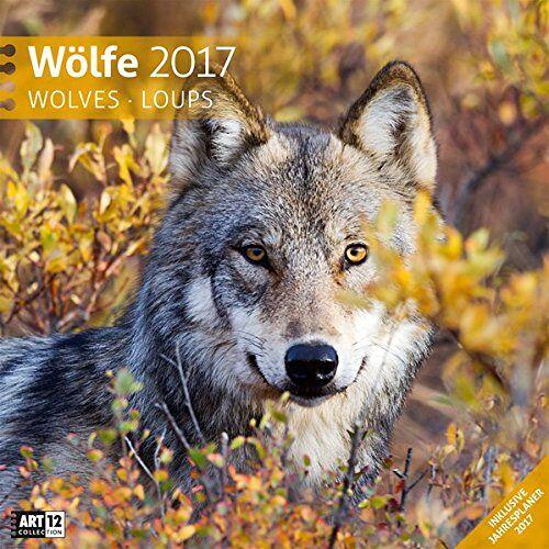 Ackermann Kunstverlag - Wölfe 30 x 30 cm 2017 - Preis vom 23.01.2020 06:02:57 h