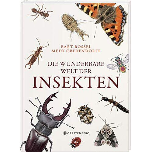 Bart Rossel - Die wunderbare Welt der Insekten - Preis vom 20.06.2020 04:58:35 h