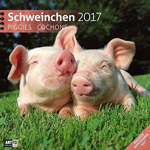 Ackermann Kunstverlag - Schweinchen 30 x 30 cm 2017 - Preis vom 23.01.2020 06:02:57 h