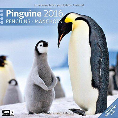 Ackermann Kunstverlag - Pinguine 30 x 30 cm 2016 - Preis vom 04.08.2019 06:11:31 h