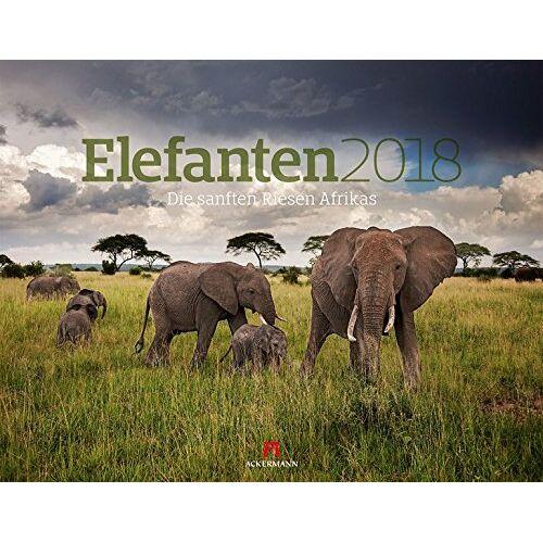 Ackermann Kunstverlag - Elefanten 2018 - Preis vom 09.04.2020 04:56:59 h