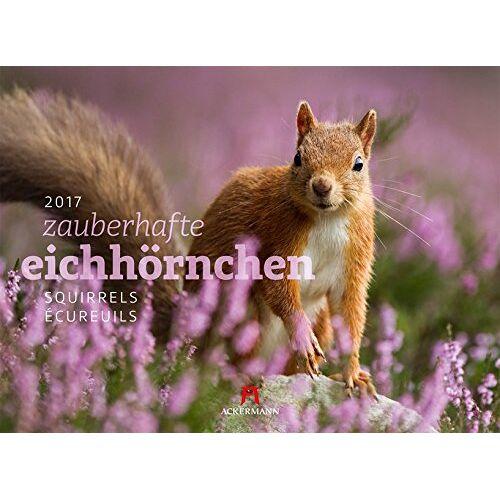 Ackermann Kunstverlag - Eichhörnchen 2017 - Preis vom 09.04.2020 04:56:59 h