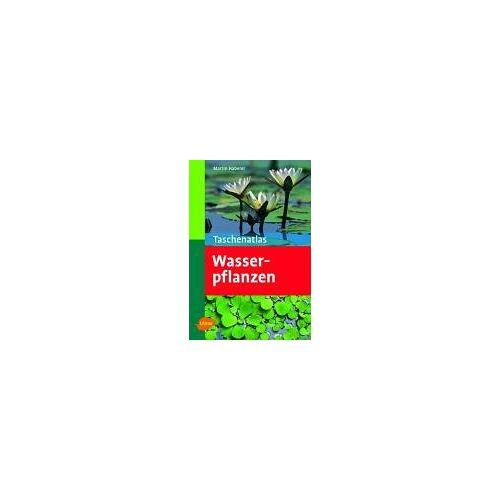 Martin Haberer - Taschenatlas Wasserpflanzen - Preis vom 22.10.2020 04:52:23 h
