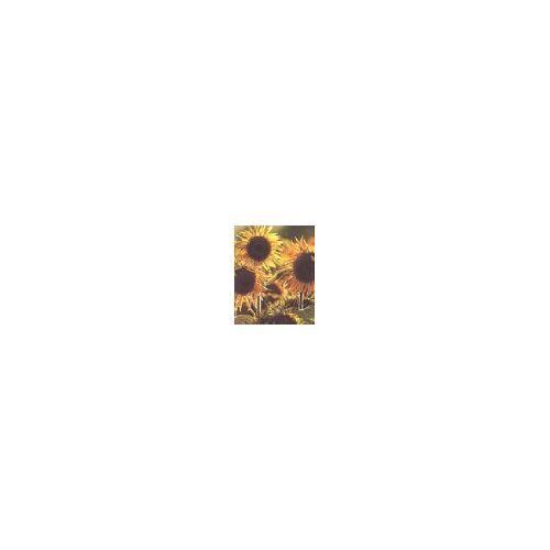 - Sonnenblumen - Preis vom 02.11.2020 05:55:31 h