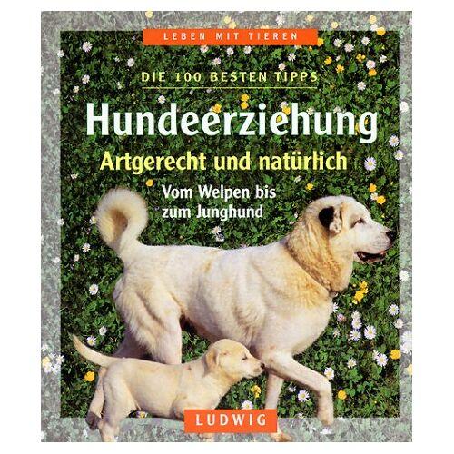 Carola Kusch - Hundeerziehung - Preis vom 13.09.2019 05:32:03 h