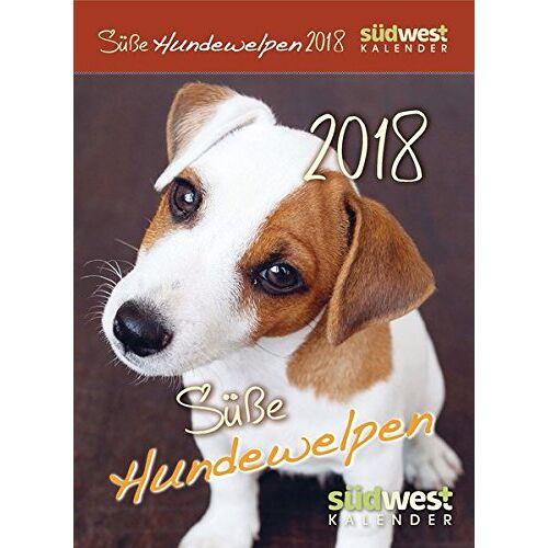 - Süße Hundewelpen 2018 ABK - Preis vom 20.10.2020 04:55:35 h