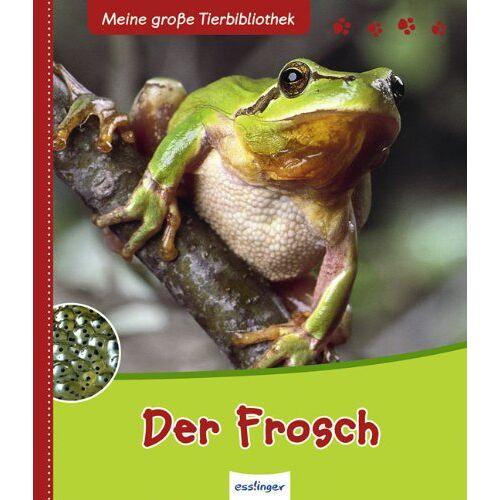 Paul Starosta - Der Frosch - Preis vom 06.09.2020 04:54:28 h