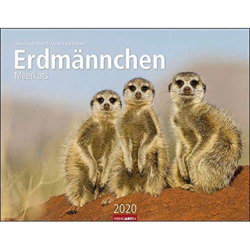 Weingarten - Erdmännchen 2020 44x34cm - Preis vom 16.10.2020 04:56:20 h