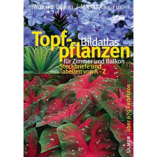 Moritz Bürki - Bildatlas Topfpflanzen für Zimmer und Balkon: Steckbriefe und Tabellen von A - Z - Preis vom 16.04.2021 04:54:32 h
