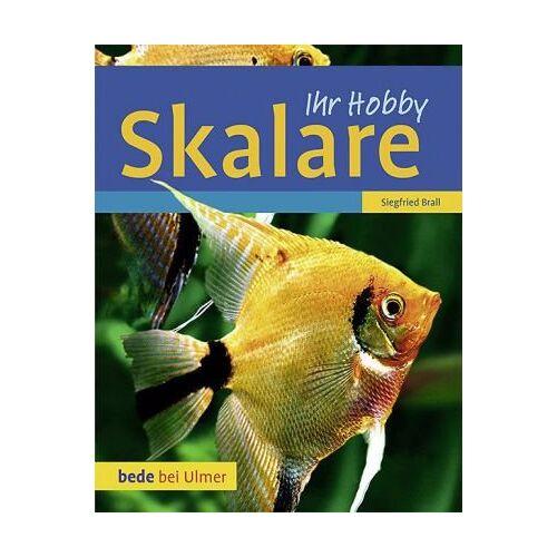 Siegfried Brall - Skalare - Preis vom 14.01.2021 05:56:14 h