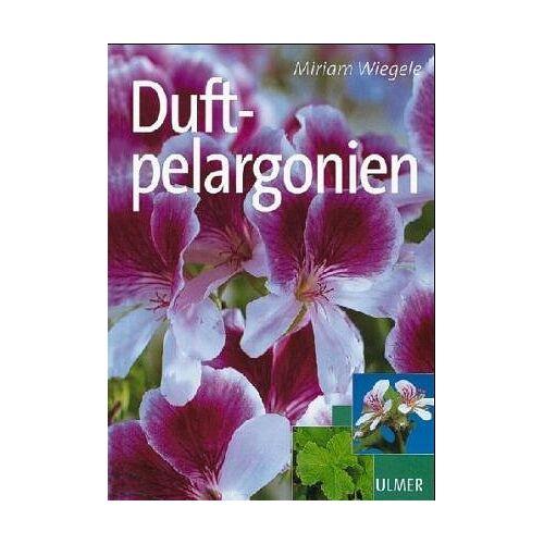 - Duftpelargonien - Preis vom 12.04.2021 04:50:28 h