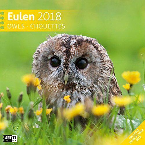 Ackermann Kunstverlag - Eulen 30x30 2018 - Preis vom 04.08.2019 06:11:31 h