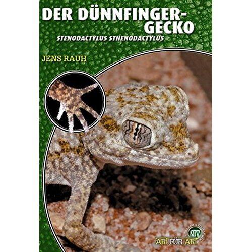 Jens Rauh - Der Dünnfingergecko: Stenodactylus stenodactylus (Art für Art / Terraristik) - Preis vom 20.10.2020 04:55:35 h