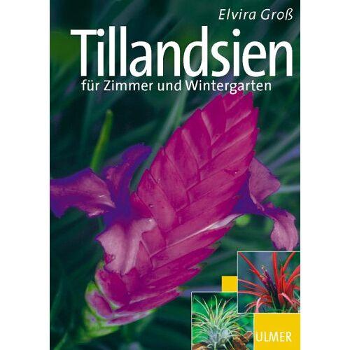 Elvira Groß - Tillandsien für Zimmer und Wintergarten - Preis vom 20.10.2020 04:55:35 h