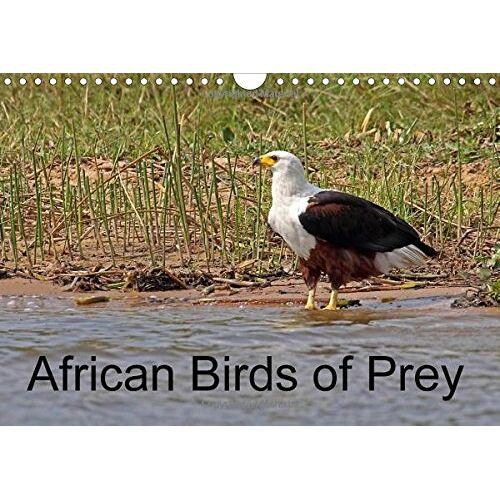 Doug McCutcheon - African Birds of Prey 2016: A selection of African birds of prey (Calvendo Nature) - Preis vom 16.05.2021 04:43:40 h