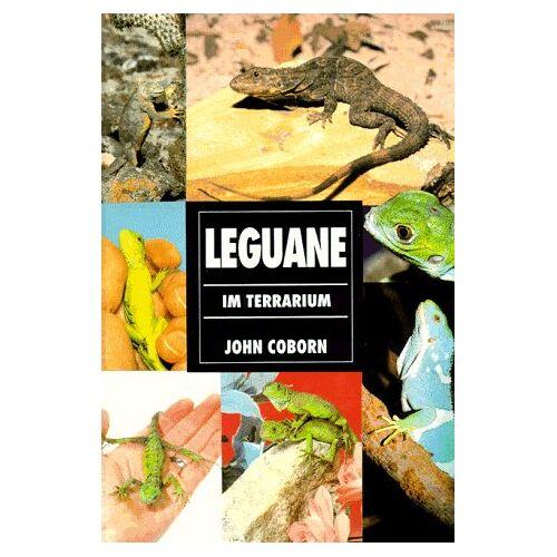 John Coborn - Leguane im Terrarium - Preis vom 05.09.2020 04:49:05 h