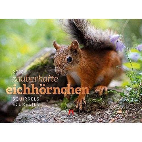 Ackermann Kunstverlag - Eichhörnchen 2018 - Preis vom 05.08.2019 06:12:28 h