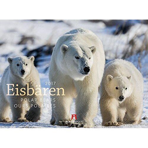 Ackermann Kunstverlag - Eisbären 2017 - Preis vom 09.04.2020 04:56:59 h