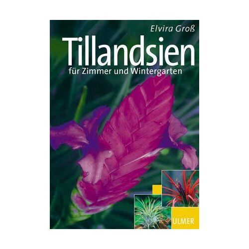 Elvira Groß - Schöne Tillandsien - Preis vom 15.01.2021 06:07:28 h