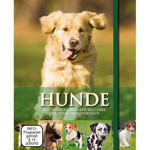 Parragon - Hunde - Buch & DVD - Preis vom 13.09.2019 05:32:03 h