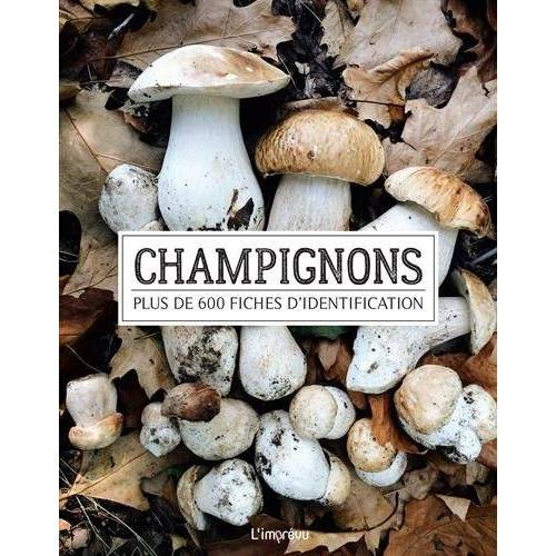 - CHAMPIGNONS - Preis vom 05.09.2020 04:49:05 h