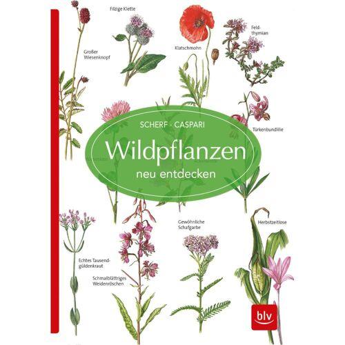WILDPFLANZEN NEU ENTDECKEN -  Tiere, Pflanzen und Garten