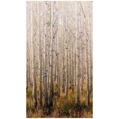 Bodenmeister Fototapete »Birken-Wald«