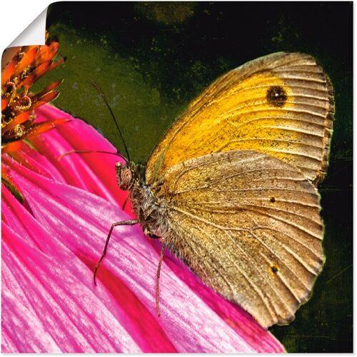 Artland Wandbild »Großes Ochsenauge«, Insekten (1 Stück)