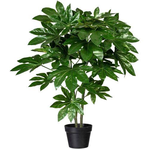 Creativ green Künstliche Zimmerpflanze »Fatsia japonica« Fatsia japonica, , Höhe 90 cm