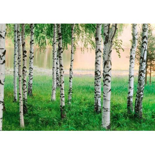 Home affaire Fototapete »Nordischer Wald«