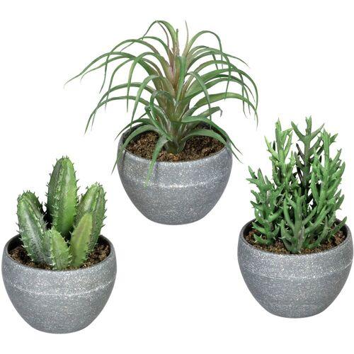 Creativ green Künstliche Zimmerpflanze »Sukkulenten« Sukkulente, , Höhe 14 cm, im Melamintopf, 3er Set