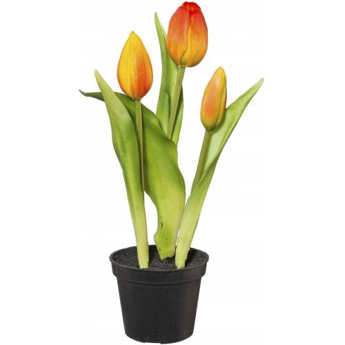 Kunstblume, Orange