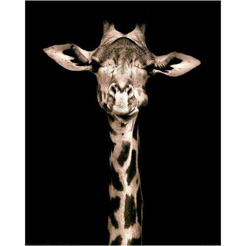 Home affaire Deco-Panel »Giraffe«, 40/50 cm