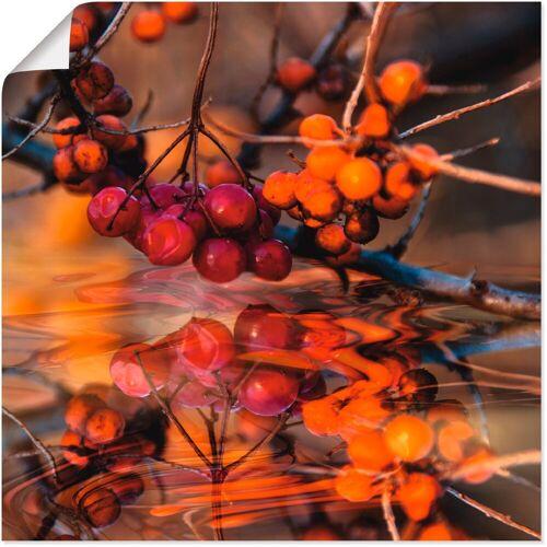 Artland Wandbild »Rote Beeren - Wildbeeren«, Pflanzen (1 Stück)