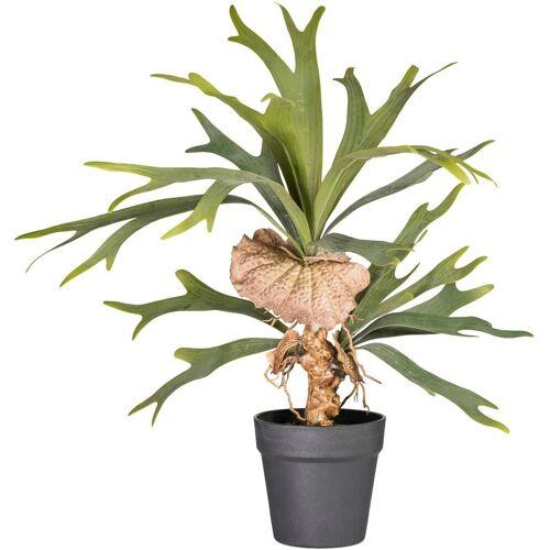 Creativ green Kunstpflanze »Platycerium«, , Höhe 60 cm