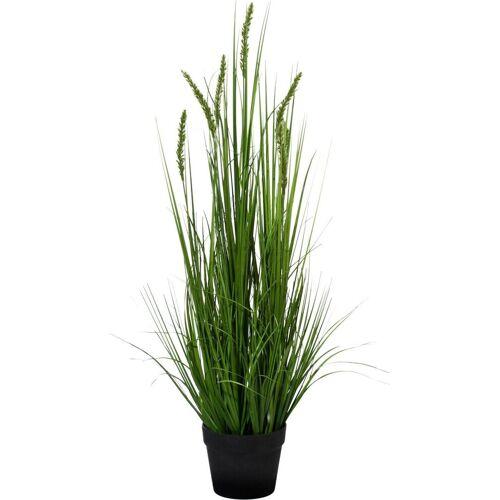 Creativ green Kunstpflanze »Penisetum«, , Höhe 90 cm