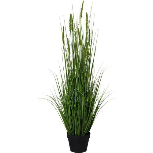 Creativ green Kunstpflanze »Penisetum«, , Höhe 110 cm