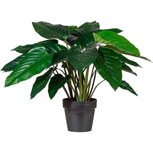 Creativ green Kunstpflanze Kunstpflanze, , Höhe 65 cm