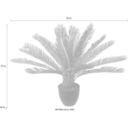 I.GE.A. Kunstpflanze »Cycaspalme im Topf« Cycaspalme, , Höhe 67 cm