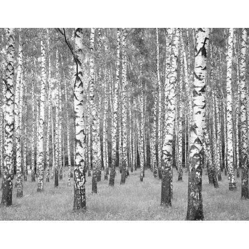living walls Fototapete »Birkenwald«, glatt, Wald, Vlies