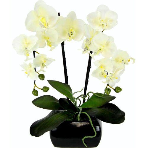 I.GE.A. Kunstpflanze Phalaenopsis, , Höhe 58 cm, weiß
